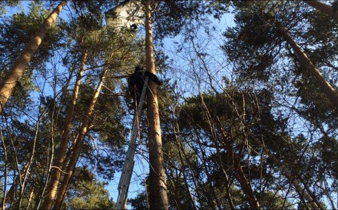 В Екатеринбурге летающая на дельтаплане девушка повисла на дереве